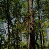 Escalade d'arbre à Sanguinet