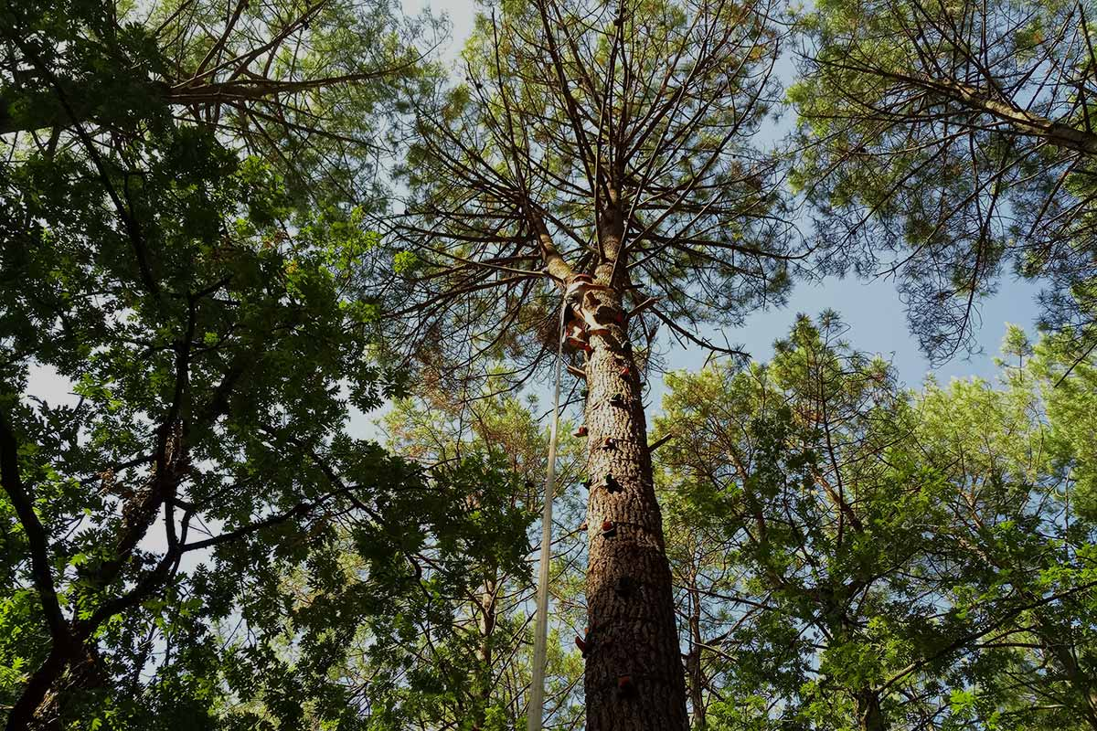 escalade d'arbre sanguinet