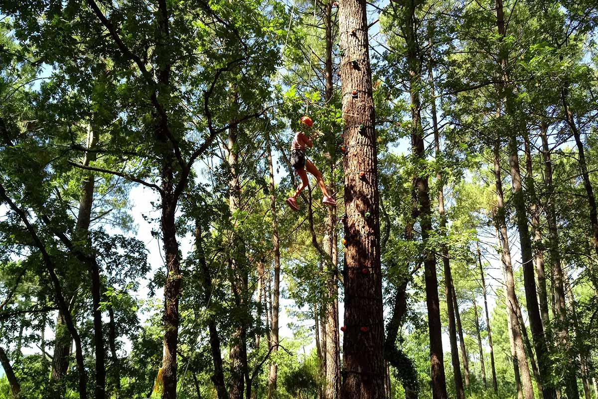 grimpe d'arbre bassin arcachon