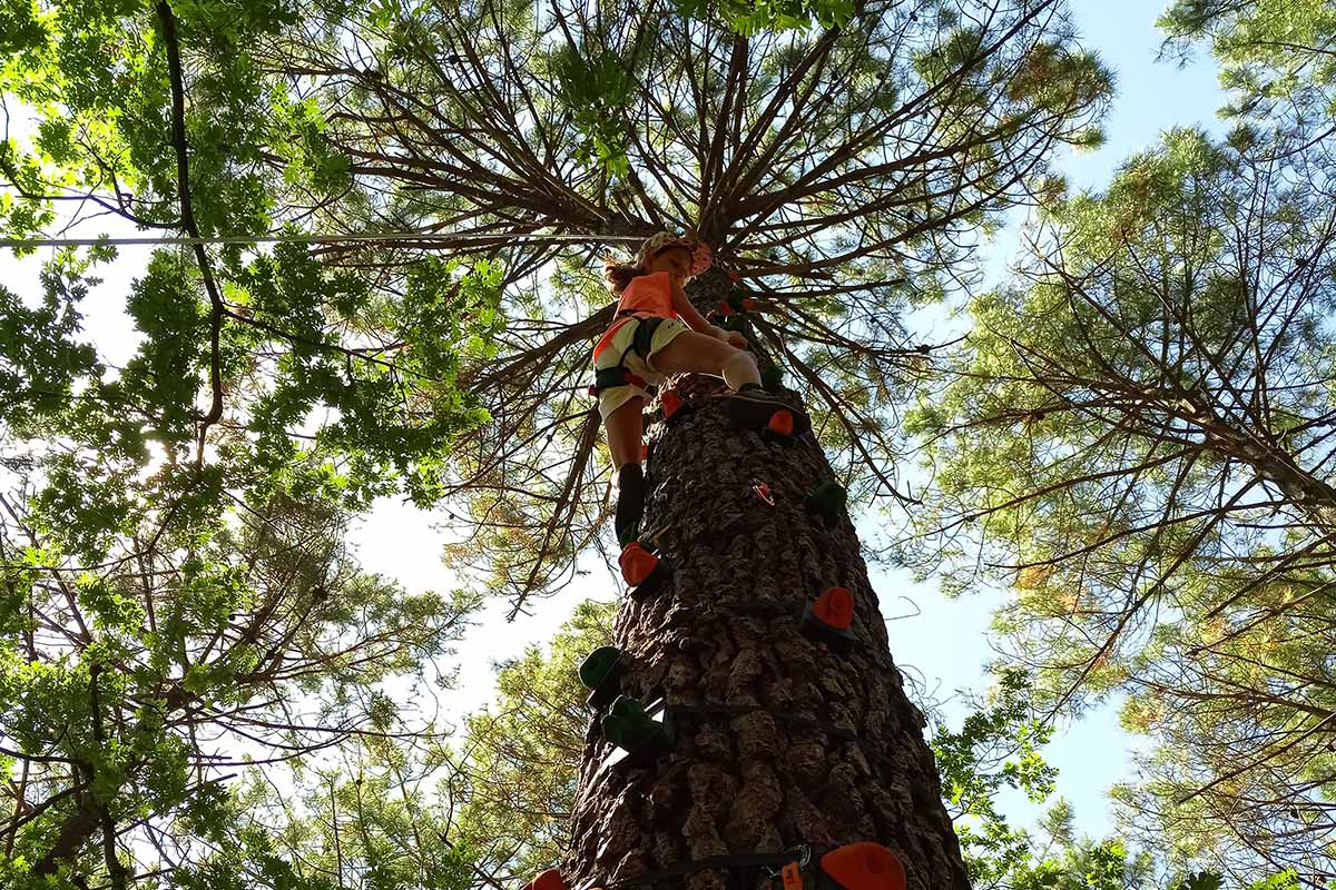 escalade d'arbre yakocean